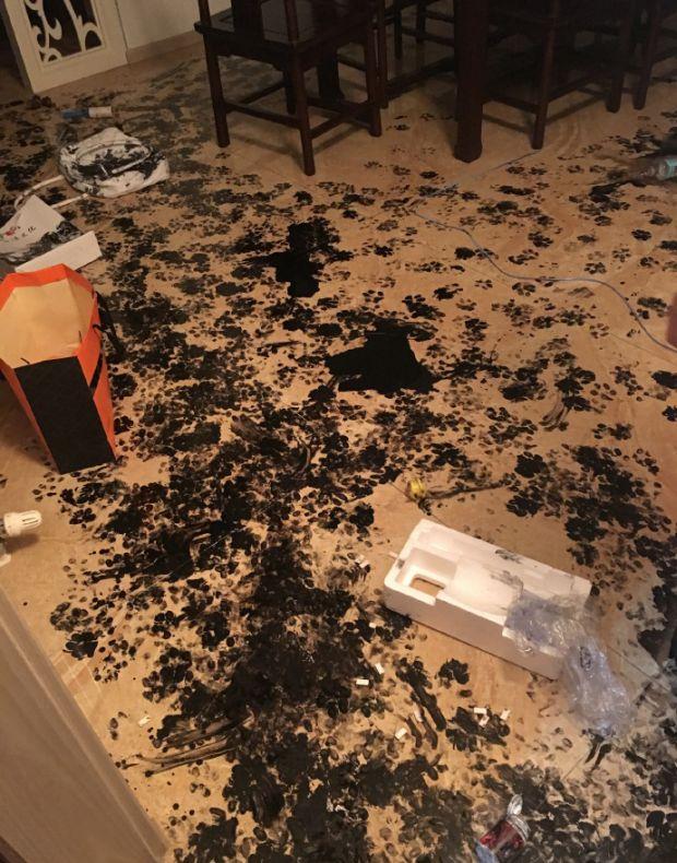 Wyszli z domu a ich pies zrobił małą masakrę