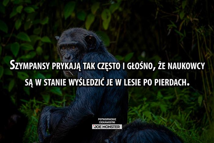 Szympansy pierdzą tak często i głośno, że naukowcy są w stanie wyśledzić je w lesie po pierdach.