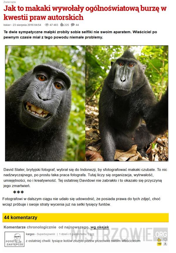 Małpie selfie –