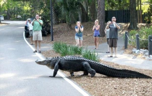 Where To Eat Alligator In West Palm Beach Florida