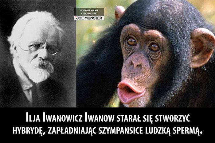 Ilja Iwanowicz Iwanow starał się stworzyć hybrydę, zapładniając szympansice ludzką spermą.