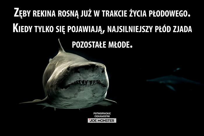 Zęby rekina rosną już w trakcie życia płodowego. Kiedy tylko się pojawiają, najsilniejszy płód zjada pozostałe młode.