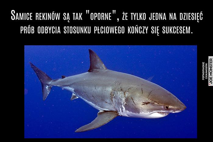 Samice rekinów są tak