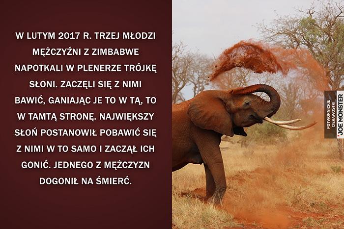 W lutym 2017 r. trzej młodzi mężczyźni z Zimbabwe napotkali w plenerze trójkę słoni. Postanowili się z nimi pobawić, ganiając je to w tą, to w tamtą stronę. Największy słoń postanowił pobawić się w to samo z ludźmi i zaczął ich gonić. Jednego z mężczyzn dogonił na śmierć.