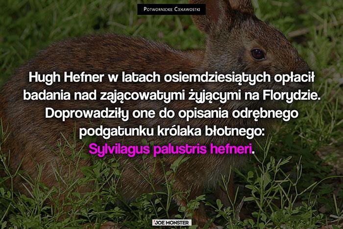 Hugh Hefner w latach osiemdziesiątych opłacił badania nad zającowatymi żyjącymi na Florydzie. Doprowadziły one do opisania odrębnego podgatunku królaka błotnego: Sylvilagus palustris hefneri.