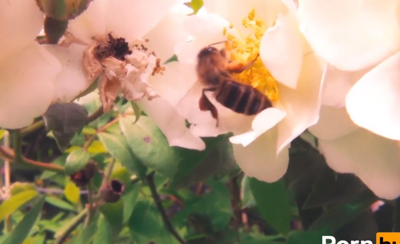 Pszczołoseksualność - PronHub znów ratuje świat!