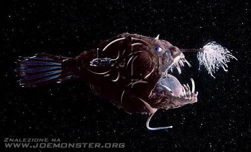 kolejna randka z rybami w morzu