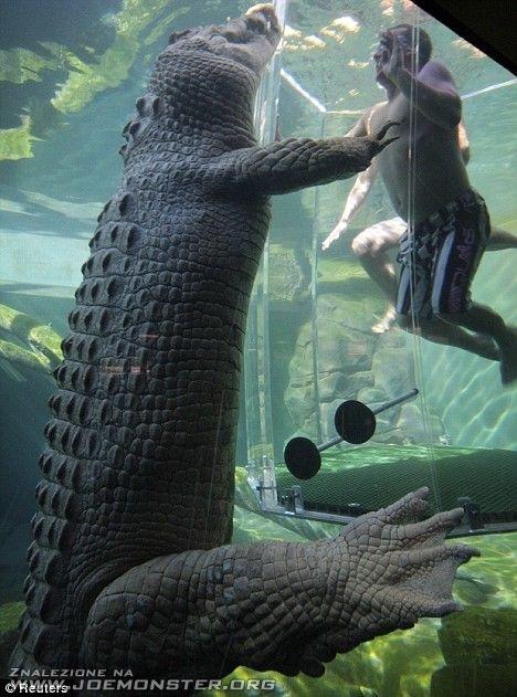 Klatka śmierci: ty kontra krokodyl