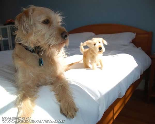 Dwa psy