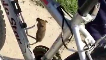 Wielka ucieczka myszy