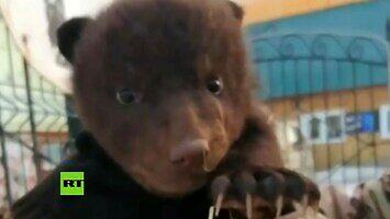 Wyjęli z okna życia trzy... niedźwiedzie