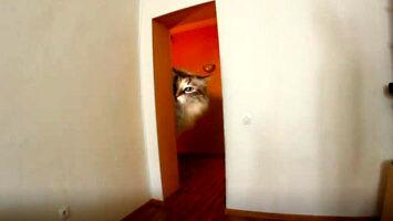 """""""Mam w domu dużego kotka"""""""