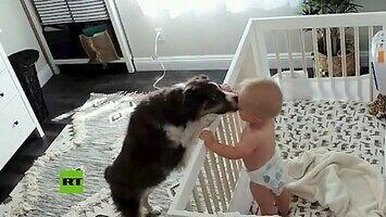 Pies uspokaja płaczące dziecko