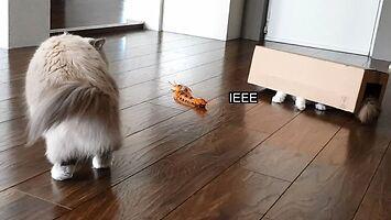 Skolopendromorf chce pożreć kota