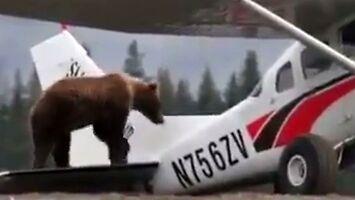 Niedźwiedź, który chciał latać samolotem