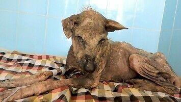 Niesamowita przemiana umierającego psa