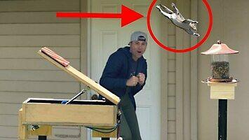 Mark Robber kontra wiewiórki, czyli Ninja Warrior dla złodziei ziaren
