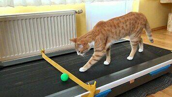 Kot poznaje bieżnię