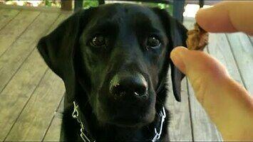 Ten pies zaaportuje dosłownie wszystko