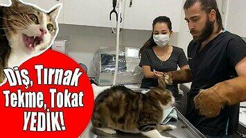 Słodki kotek u weterynarza. Ktoś chce pogłaskać?