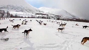 Lodowiec, psie zaprzęgi i orki - witamy w Norwegii