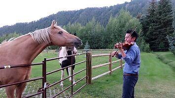 Konie, które lubią, jak się im gra na skrzypcach