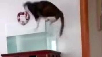 Podwójny skok kota