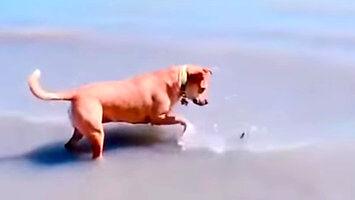 Pies coś znalazł