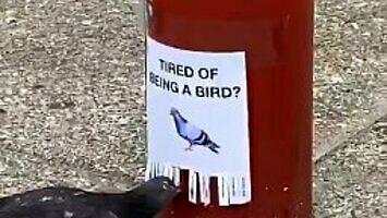 Zmęczony byciem ptakiem?