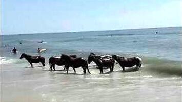Dzikie konie szukają ochłody