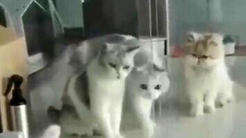 Nie wszystkie koty są cieczą, ale ten jest
