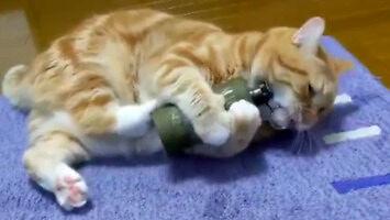 Wybuchowa zabawka dla kota