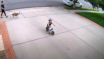 Jakiś dzieciak codziennie jeździł mu po podjeździe na rowerku
