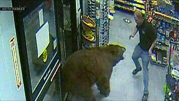 Niedźwiedź na zakupach