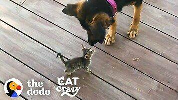 Kot przejmuje psa