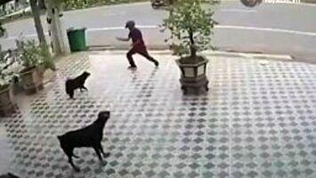 Jak obronić się przed psami?