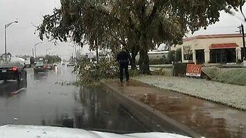 Nierówna walka policjanta z gałęzią