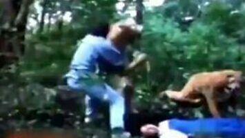 Bohater odpiera atak kilku tygrysów