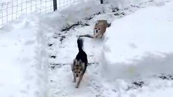 Śnieżny tor wyścigowy dla psów