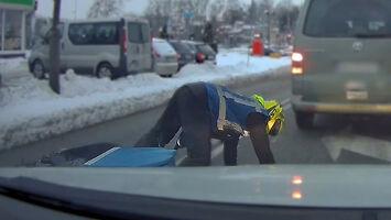Typowe zachowanie warszawskiego kierowcy?