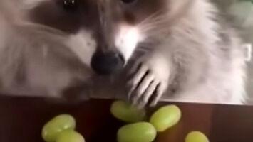 Nie dotykaj moich winogron!