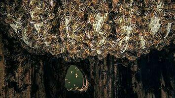 Dlaczego pszczoły wolą dziuplę zamiast kwadratowego pudełka?