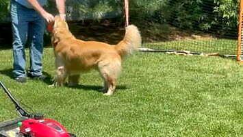 Pies bez wyczucia kierunku - zabawa frisbee