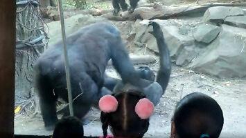 Wizyta w zoo tylko dla dorosłych