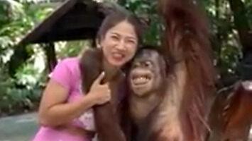 Orangutan zna się na rzeczy