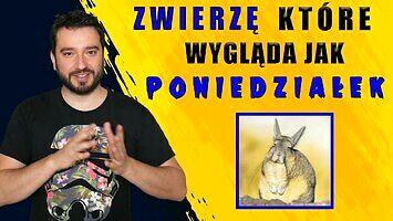 Zwierzę, które wygląda jak poniedziałek | NEWSY BEZ WIRUSA | Karol Modzelewski