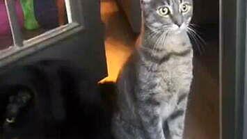 Kiedy twój kot zdaje sobie sprawę, że mieszka w dzielnicy patusów