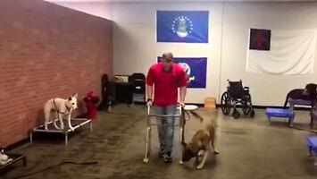 Nie każdy pies nadaje się na psiego asystenta dla osób niepełnosprawnych