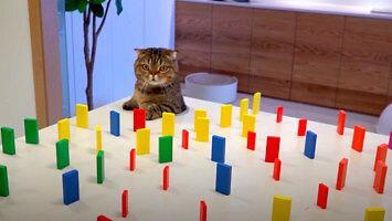 Jak kot poradzi sobie z wyzwaniem z przeszkodami?