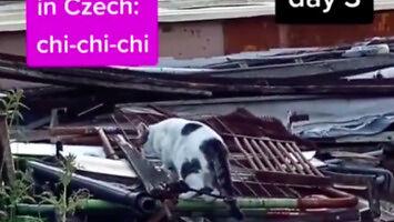 Jak skutecznie zawołać kota? Najlepiej po niemiecku